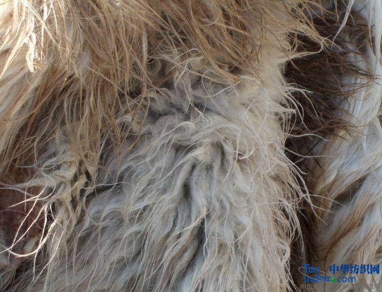 羊毛/供应商 王龙飞(个体)所属分类原料,毛纺类含绒量不等